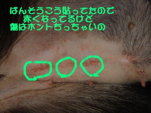 b0101991_20563260.jpg