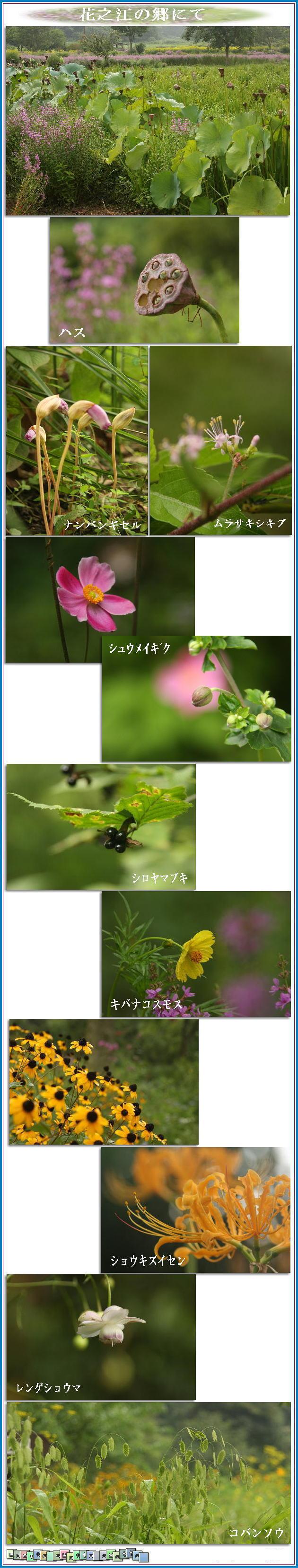 f0164592_715582.jpg