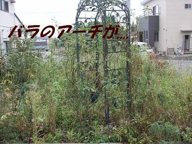 f0179203_17491362.jpg