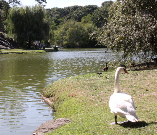 野生の王国化しつつあるセントラルパーク北限の湖 Harlem Meer _b0007805_12392447.jpg