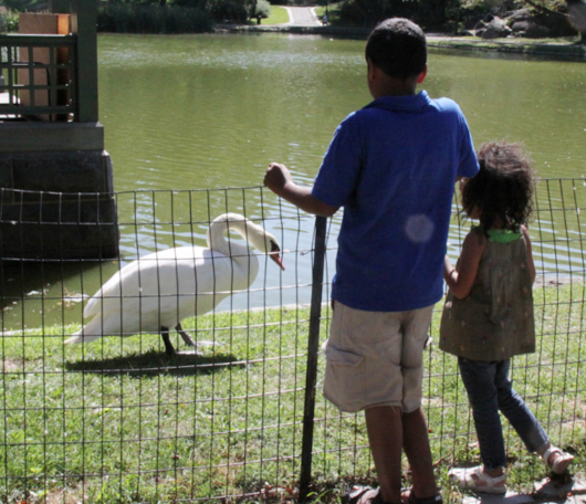 野生の王国化しつつあるセントラルパーク北限の湖 Harlem Meer _b0007805_1239681.jpg