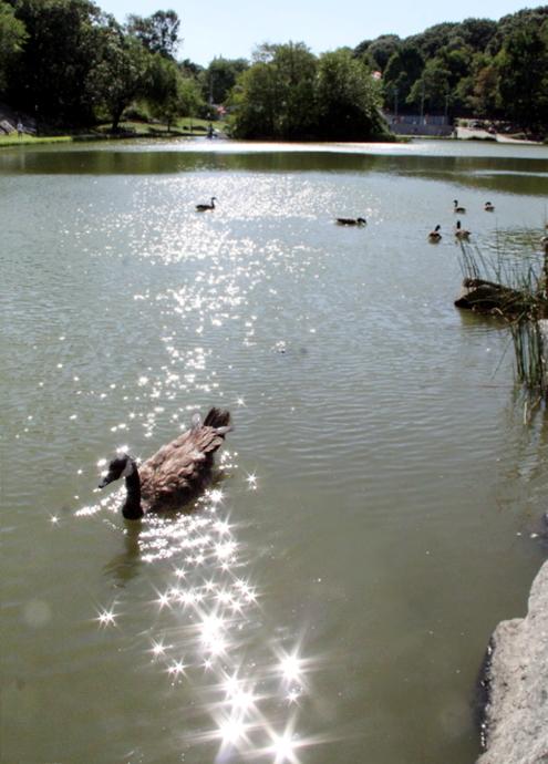 野生の王国化しつつあるセントラルパーク北限の湖 Harlem Meer _b0007805_12425065.jpg