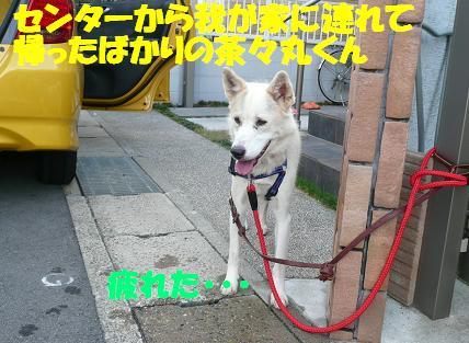 f0121712_15413851.jpg