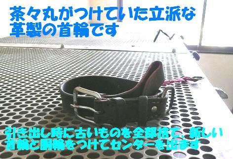 茶々丸君のご紹介♪_f0121712_16545760.jpg