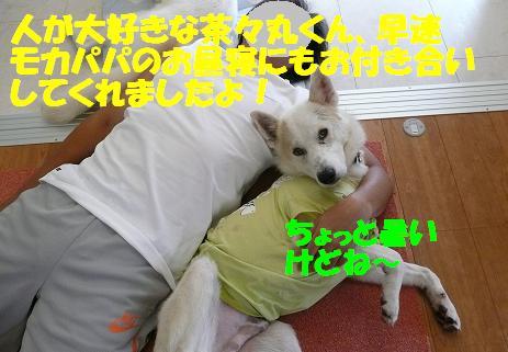 茶々丸君のご紹介♪_f0121712_16561450.jpg