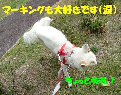 茶々丸君のご紹介♪_f0121712_169414.jpg
