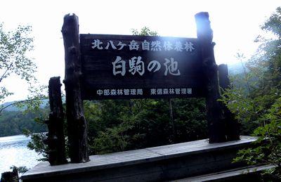 北八ヶ岳 白駒の池 八千穂高原へ_c0073016_2333487.jpg