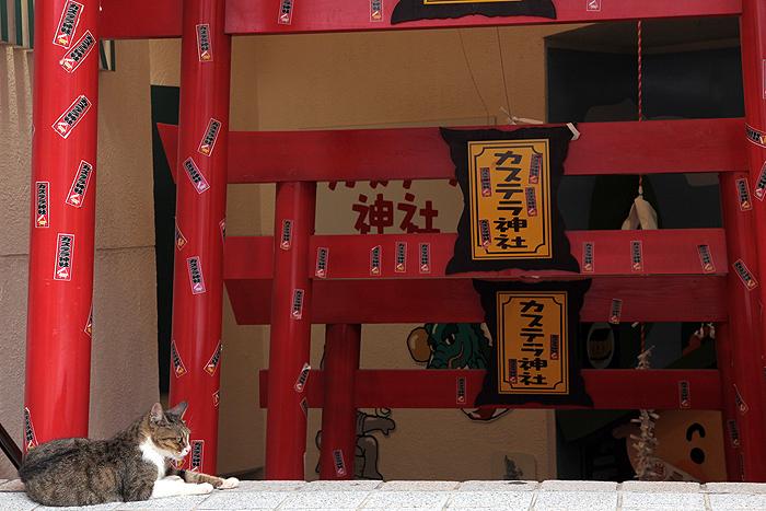 長崎のネコ_e0180823_1247432.jpg