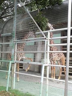 熊本市動植物園_e0184224_1416227.jpg