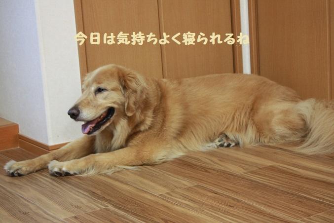 f0114128_2033666.jpg
