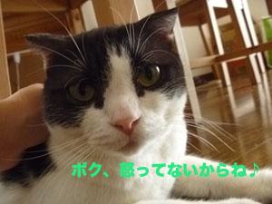 f0238772_14505131.jpg