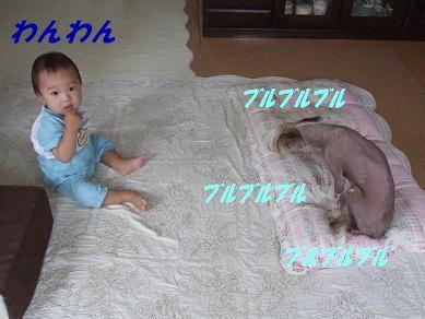 f0179203_1634151.jpg