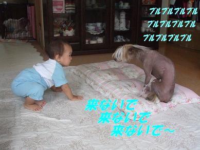 f0179203_16342715.jpg