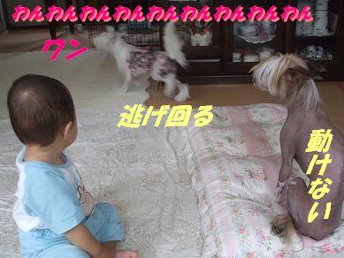 f0179203_16345276.jpg