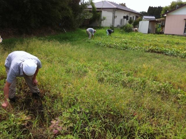 農業体験。_c0200506_17281346.jpg