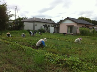 農業体験。_c0200506_17285265.jpg