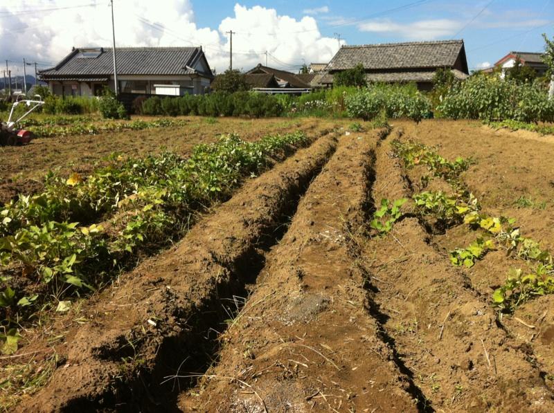 農業体験。_c0200506_17341354.jpg