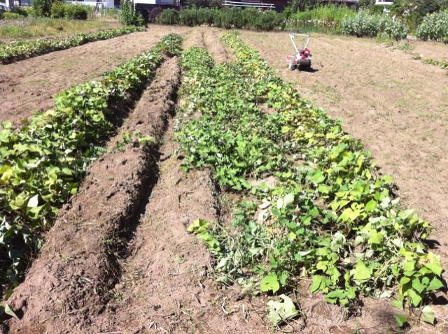 農業体験。_c0200506_17342770.jpg
