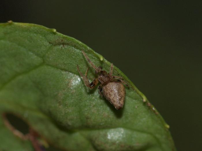 何蜘蛛?_c0116915_23404128.jpg