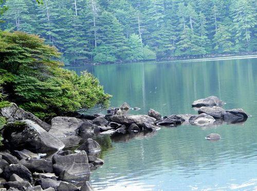 北八ヶ岳 白駒の池 八千穂高原へ_c0073016_22142167.jpg