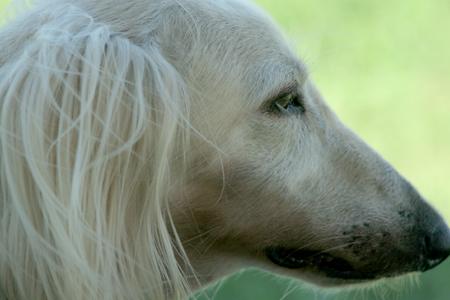 DOG RUN_a0097735_2355513.jpg