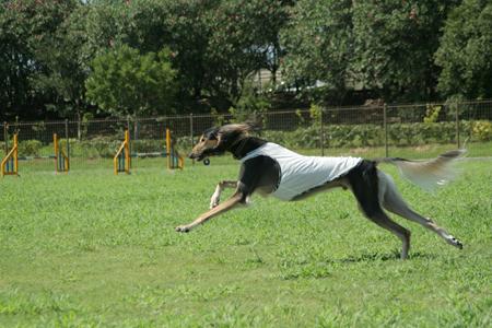 DOG RUN_a0097735_23555625.jpg
