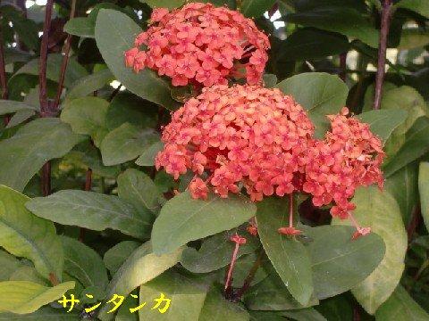 b0012636_19503584.jpg