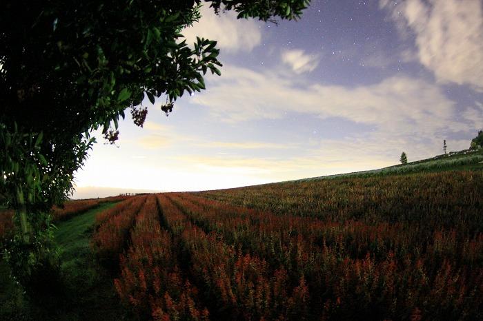 秋色の降り注ぐ丘にて・・・_a0122544_19585897.jpg