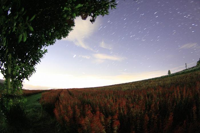 秋色の降り注ぐ丘にて・・・_a0122544_2015376.jpg