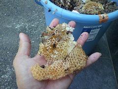 ミツバチの巣_d0134352_0125641.jpg