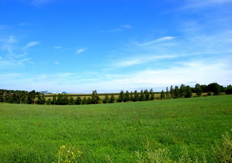 北の果てオホーツク、アザラシVSキタキツネの旅【1】_e0071652_113379.jpg