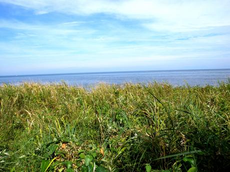 北の果てオホーツク、アザラシVSキタキツネの旅【1】_e0071652_12271196.jpg