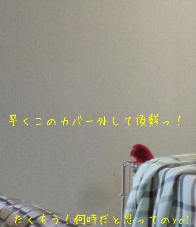 f0177261_9363186.jpg