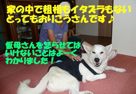f0121712_14302139.jpg