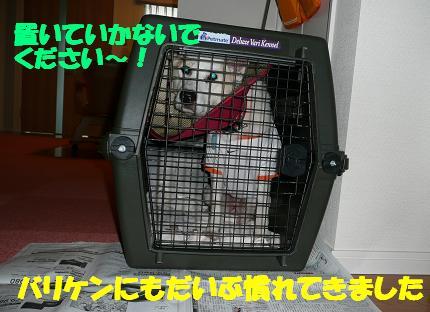 f0121712_1459493.jpg