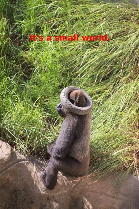 まん丸なゴリラの赤ちゃんのお披露目_c0222817_22422240.jpg