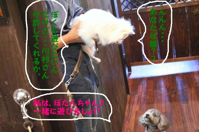 b0130018_9534972.jpg