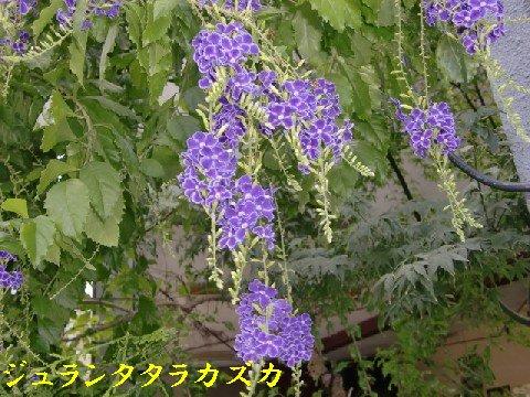 b0012636_15245213.jpg