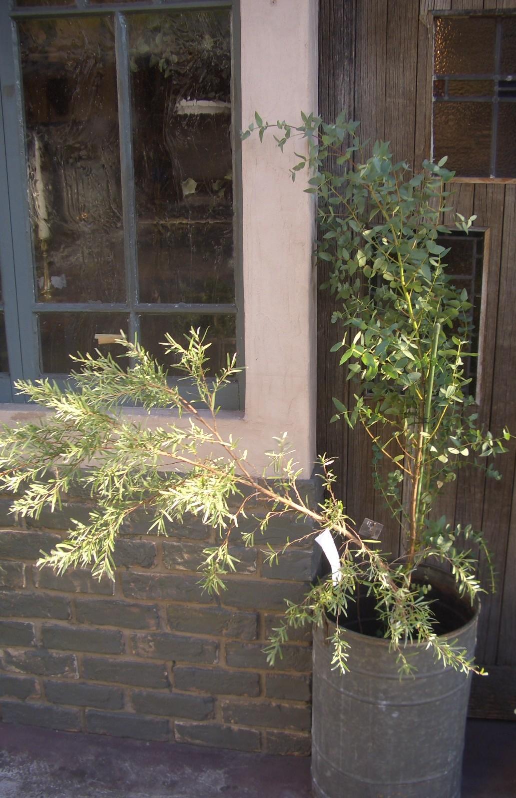 植物たち。_d0162257_11533563.jpg