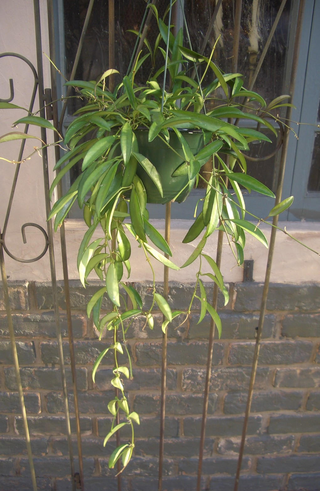 植物たち。_d0162257_11541963.jpg