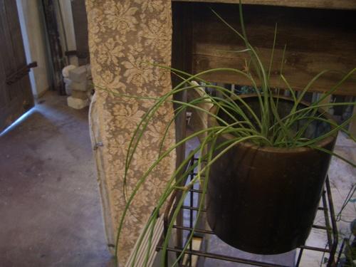 植物たち。_d0162257_11545897.jpg