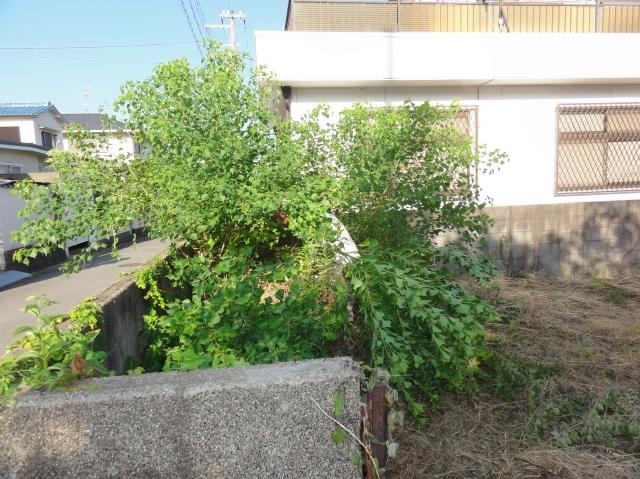 みさき公園団地の刈り草片付け④_c0108460_14584326.jpg