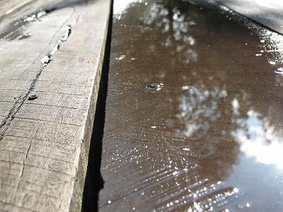 雨あがり_a0129867_832202.jpg