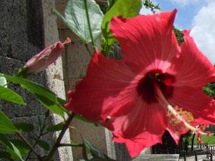 沖縄に行ってきました・・その2_e0182479_14495878.jpg