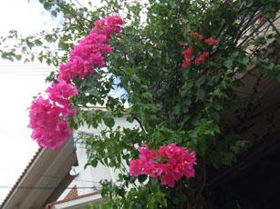 沖縄に行ってきました・・その2_e0182479_14501748.jpg