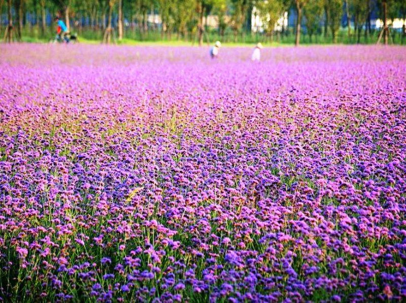 ■呉江のとある公園_e0094583_16382232.jpg