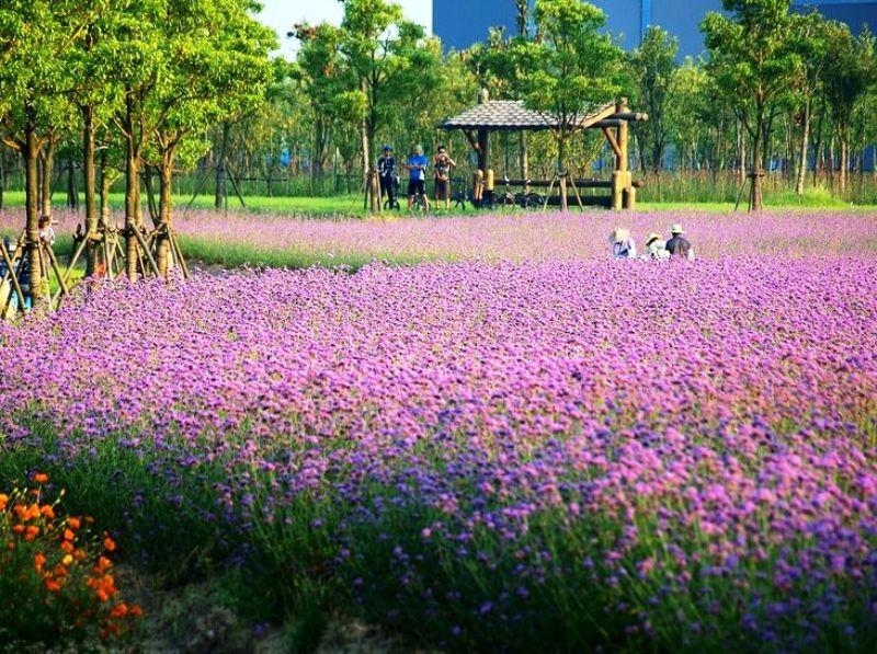 ■呉江のとある公園_e0094583_16382968.jpg
