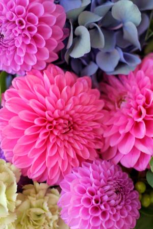 *いつも片手に花を持って*_d0000304_1652519.jpg