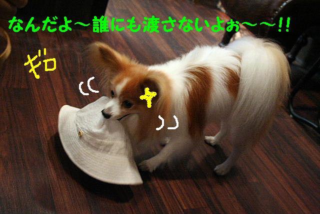 3D_b0130018_1885053.jpg