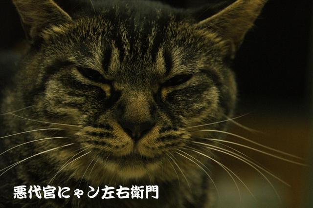 CAT THEATER(ネコ劇場)_e0196927_1452310.jpg